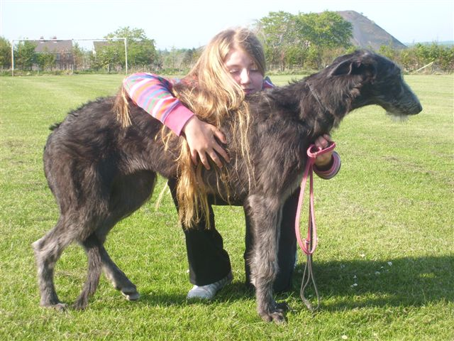 Katie and Dot the Deerhound